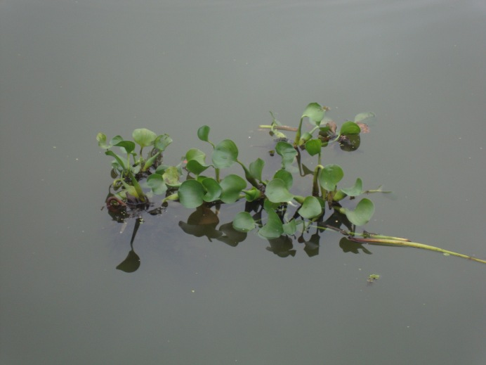 Plant that turns the Tennessee - Tombigbee Waterway into an obstacle course